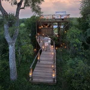 AA 40: Tree hotel Safari